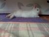 fany3838 - éleveur de rongeur HamsterStory