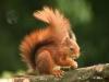 Liloule77 - éleveur de rongeur HamsterStory