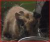 didounenina - éleveur de rongeur HamsterStory