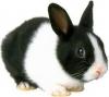 sioux06andlutin - éleveur de rongeur HamsterStory