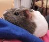 Shmoulb - éleveur de rongeur HamsterStory