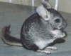 owe5 - éleveur de rongeur HamsterStory