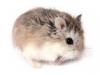 biche3 - éleveur de rongeur HamsterStory