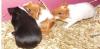 noisettequincy - éleveur de rongeur HamsterStory