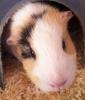 star2810 - éleveur de rongeur HamsterStory