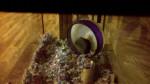 Gerbille Cuffy AKA Scruffy - Gerbille Femelle (Autre)