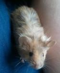 Lynnie - Souris (8 mois)