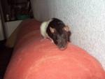 Délice - Souris (11 mois)