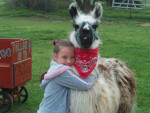 Me And Llama ( Sweetmix ) - Mouton Mâle (2 ans)