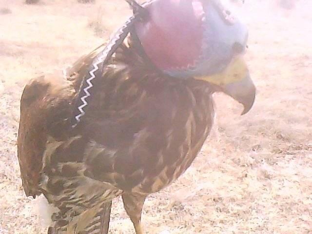 miidgar - Oiseau