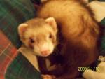Po - Mâle (2 ans)
