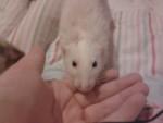 chuck - Mâle (3 ans)