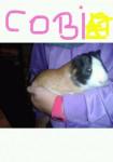 cobi - Mâle (6 mois)