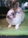 Rosalie - (2 ans)