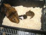tita y sus bebes - (1 an)