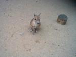 11. Hier seht ihr nochmal so einen Hasen. -