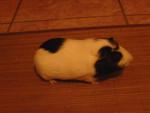 Speedy - Mâle (6 mois)
