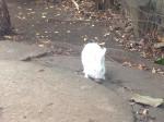Lapin nain Désolée c'est un lapin -  Femelle (0 mois)
