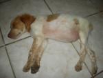 Furet princess -  Femelle (2 mois)