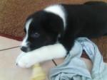 Timmy - Mâle (3 mois)