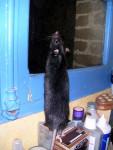 Golem fasciné par la fenêtre -