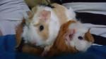 Anais y Chris - (8 mois)