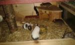Meine Mäusebande :) -
