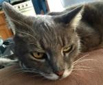 Grand lapin Littlest Kat -  Femelle (9 ans)