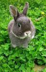 Petit lapin Lina -  Femelle (0 mois)