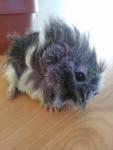 Bébé - Mâle (1 mois)
