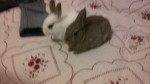 My bunnies -