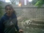 Écureuil violeta -  Femelle (8 ans)