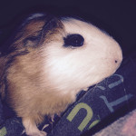Chamallow - (7 mois)