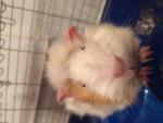Pepper - (2 ans)