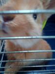 Ania - (5 mois)