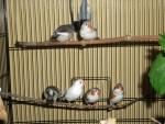 Famille oiseau - Mâle (2 ans)