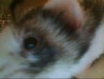 Écureuil Filou -  Femelle (5 ans)