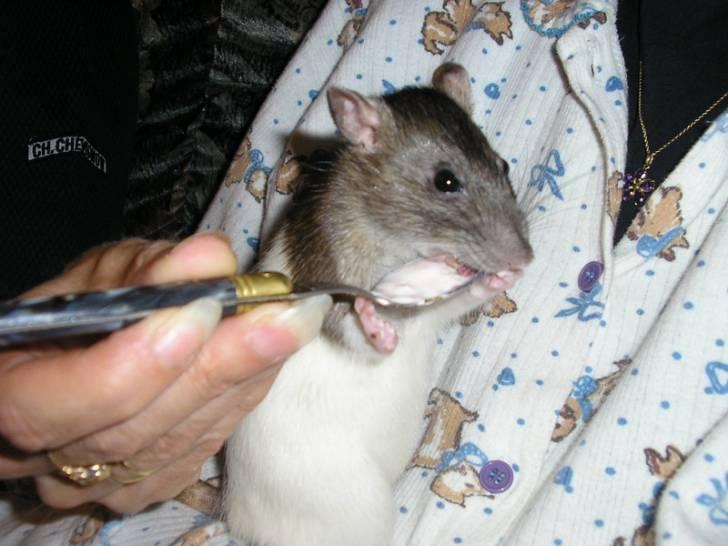 Adrienne mange un yaourt -